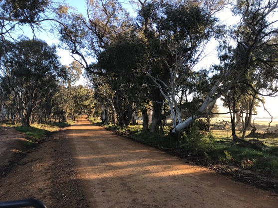 Coming back home – the laneway near our farm – Laverstock NSW
