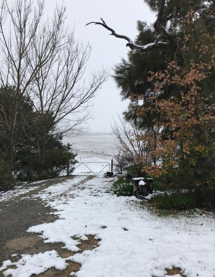 The laneway from a snowy garden - August 2019
